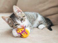 Comment choisir les jouets pour chat
